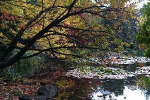 北海道庁の左の池