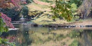 道庁の池に写る風景