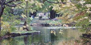 道庁の池の風景