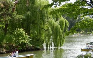 中島公園ーボート
